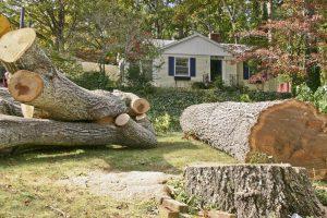 Tree Removal Phoenix